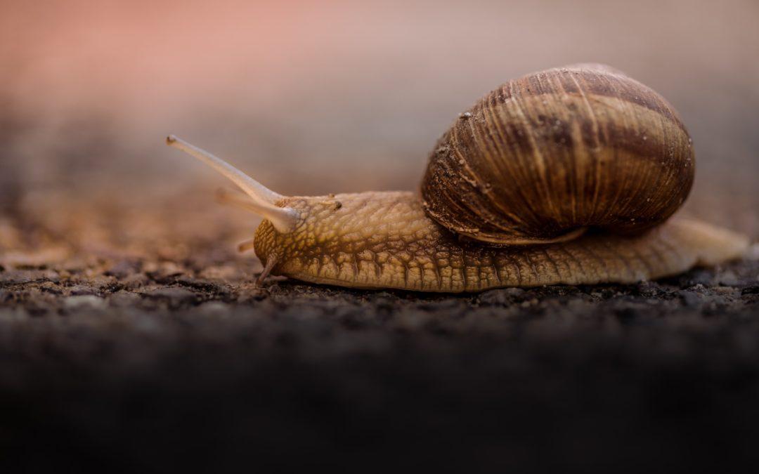 Tipps zum Abbremsen im Alltag – Entschleunigung