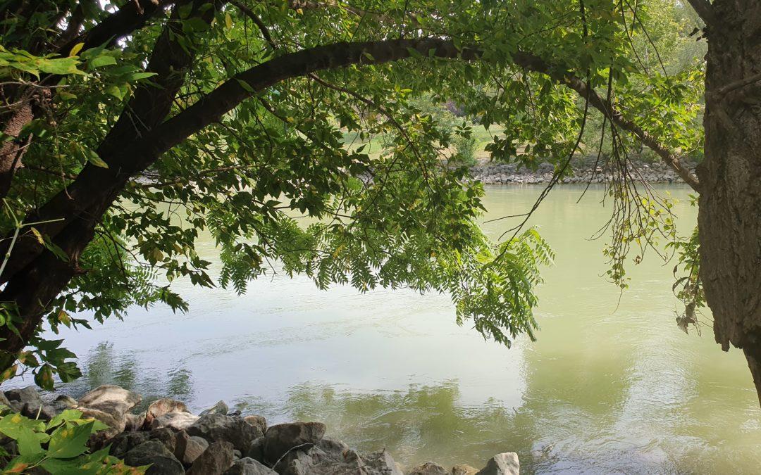 Mein guter Freund, der Donaukanal